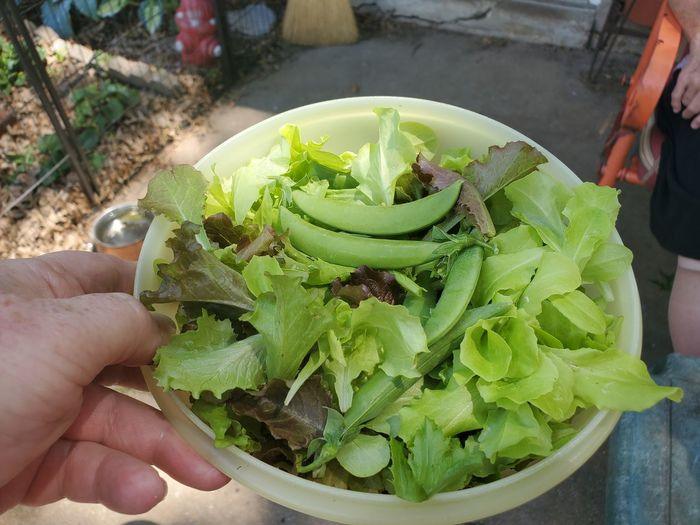 Midsection of person holding vegetables in container