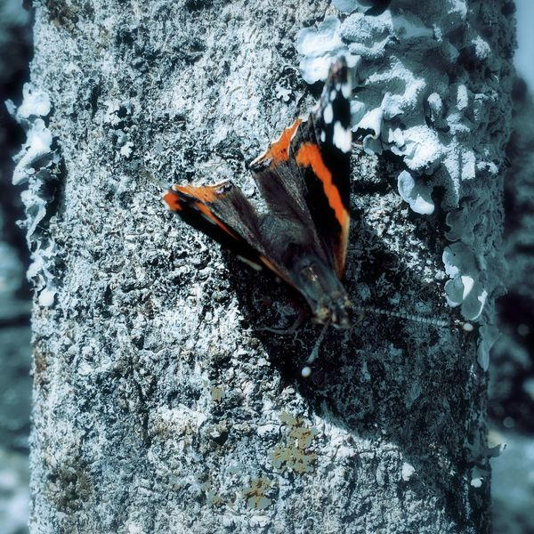 Tree Trunk Butterfly Nature Close Up Liquen