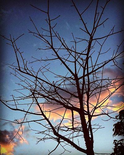 Brazos al cielo árbol Tree Morning Sky Withotleaves Sinhojas Outdoors Nature Naturaleza Jalisco, México Showcase: January