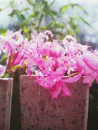 Concret Flower