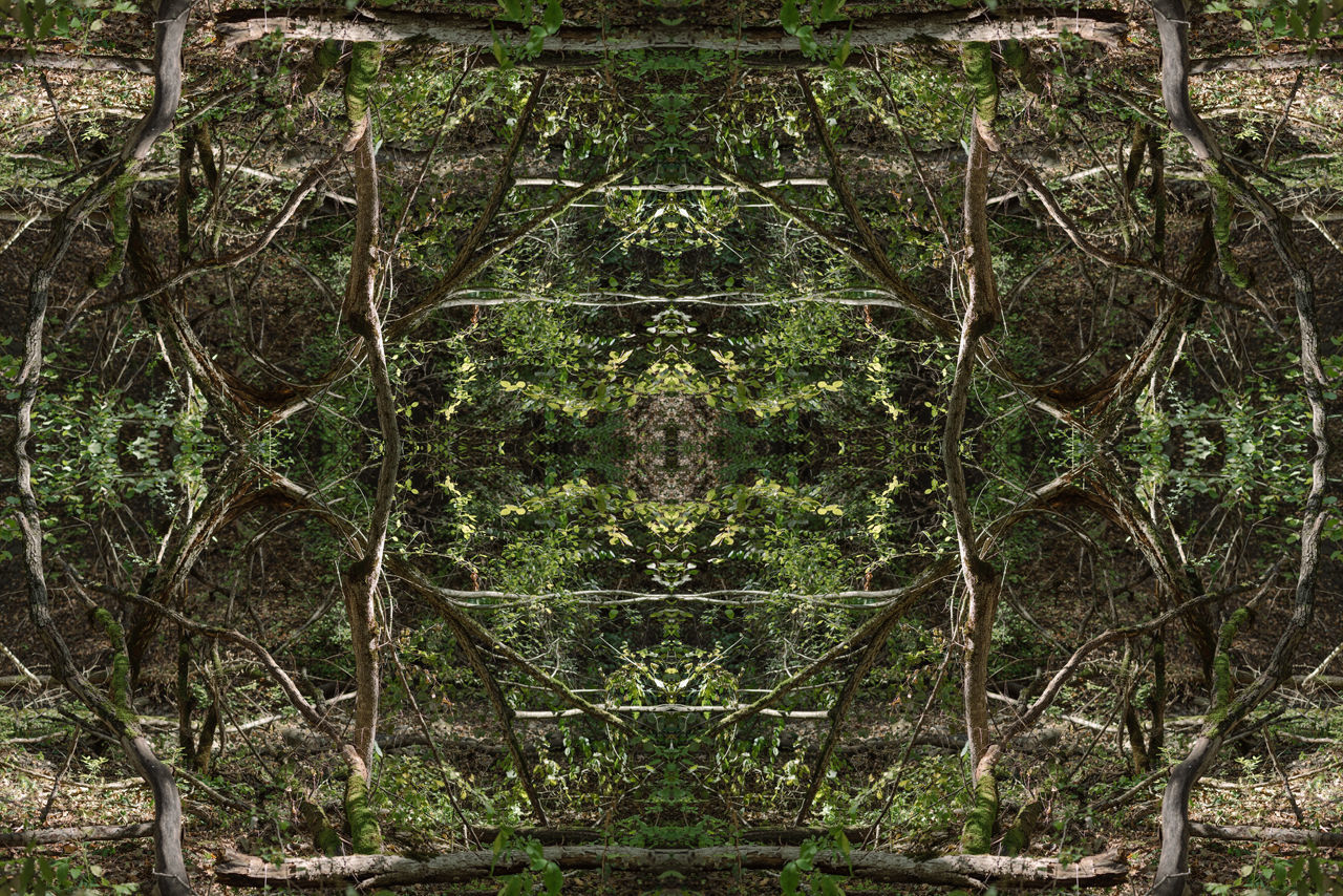 DIGITAL COMPOSITE OF TREES AND PLANTS IN FOREST