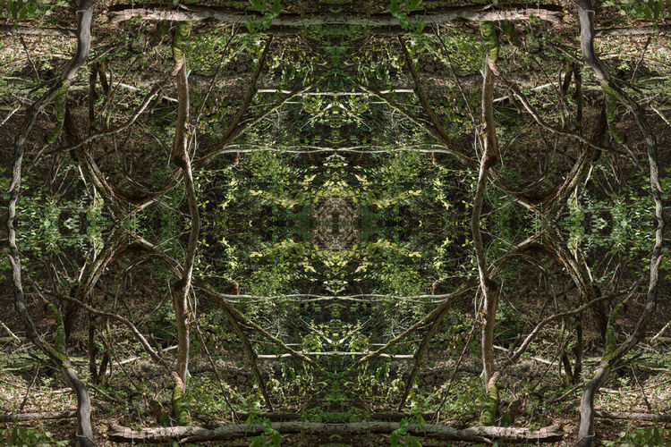 Digital composite of trees in forest