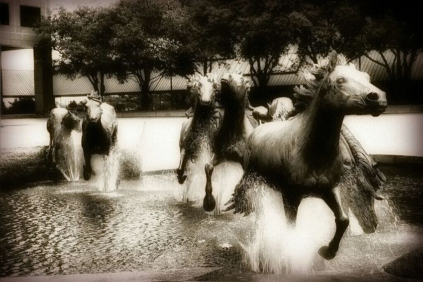 Hanging Out Eye4photography  Mustangs Las Colinas