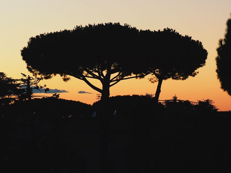 Sorrento, Silhouette Sunset Nature Tranquil Scene No People Sky Tree