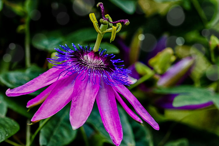 Close-up of purple flower in park