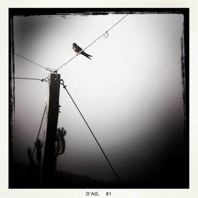 Pendiendo de un hilo - Hanging by a thread Paradise Lareki100likes Foraciutat