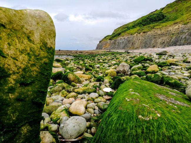 Sea Normandy Normandie France 🇫🇷 Rock Green Color Green