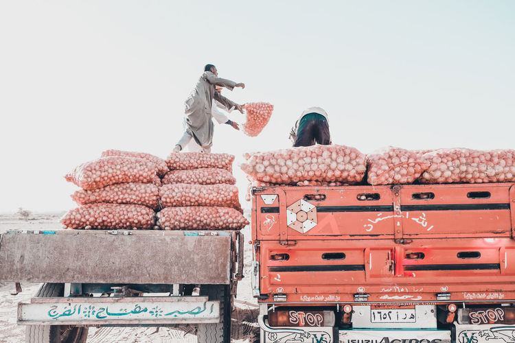 onion gathering at upper egypt The Photojournalist - 2018 EyeEm Awards The Traveler - 2018 EyeEm Awards Architecture Clear Sky Copy Space Day Land Vehicle Men Mode Of Transportation Nature Occupation Outdoors People Real People Rear View Red Sky Stack Transportation Travel Truck Two People Warm Clothing