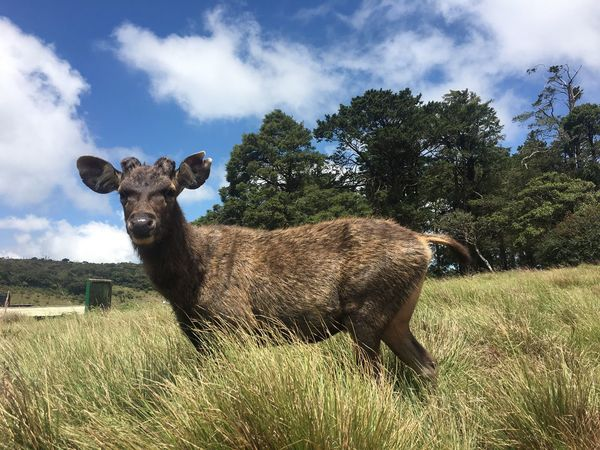 Nature in Horton Plains National Park, Sri Lanka Animal Wildlife Outdoors Growth No People Animals In The Wild Animal Themes Green Color One Animal SriLanka Wildlife Nature Place Of Worship Dear Sommergefühle EyeEmNewHere EyeEmNewHere Connected By Travel