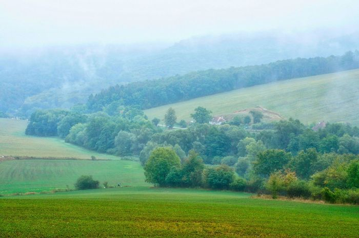 Misty morning in the valley Slovakia Agriculture Beauty In Nature Day Field Fog Grass Growth Idyllic Landscape Mountain Nature No People Outdoors Rural Scene Scenics Sky Tranquil Scene Tranquility Tree Valley