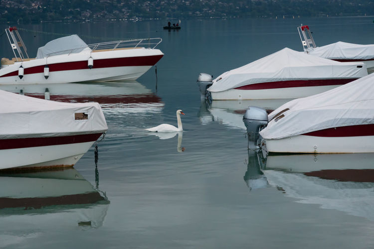 Swan by boats moored in lake