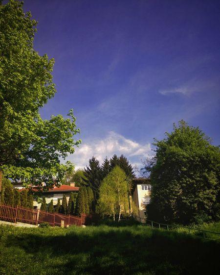 Green Vs Blue Sky Grass Trees Contrast Hill Focused Clean Nature Houses Street Neighborhood Sarajevo Visnjik Clear