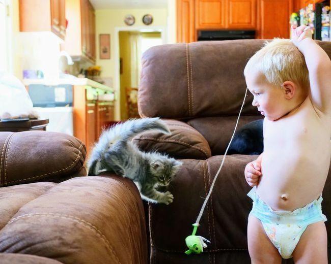 Kidsandpets Toddlerlife Toddler  Pets Sitting Dog Domestic Cat Kitten Tabby Cat Maine Coon Cat Feline Yellow Eyes