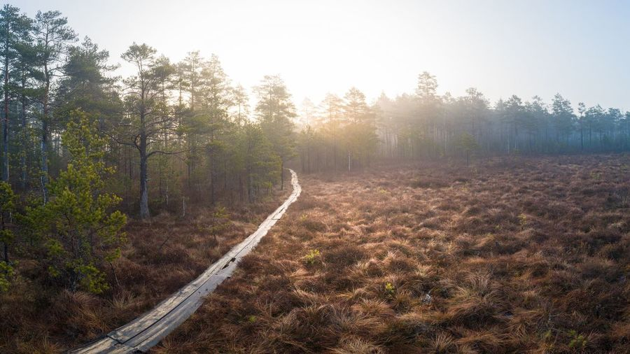 Sunrise in the Woodland Swamp Lithuania Woods WoodLand Forest Forest Photography Forestwalk Dji Aerial View Aerial Forest Path Path Pathway Path In Nature Swamp Marsh Marshland  Wild Sunrise Sunset Sun Tree Rural Scene Forest Sunset Agriculture Fog Autumn Sky Landscape Pine Tree