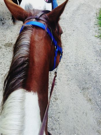 Riding Capture The Moment Horses Horse Riding I Love Horses Hitch My Baby Fun Taking Photos Enjoying Life Check This Out