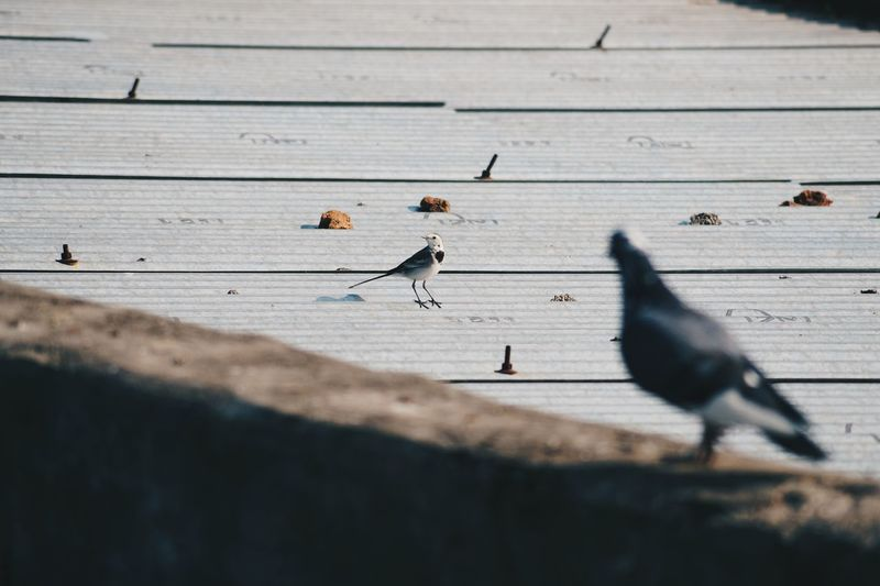 Birds perching on deck