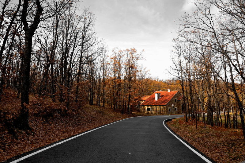Road by bare trees in forest against sky during autumn