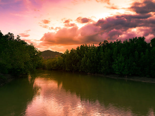 Beautiful sunset sky and reflection shadow of of mountain, mangrove forest, sunset sky on the river, landscape and scenic view of southern of Thailand Mangrove Forest Mirror Reflection Beauty In Nature Cloud - Sky Day Growth Lake Mountain Nature No People Outdoors Reflection River Scenics Sky Sunset Tranquil Scene Tranquility Tree Water Waterfront EyeEmNewHere
