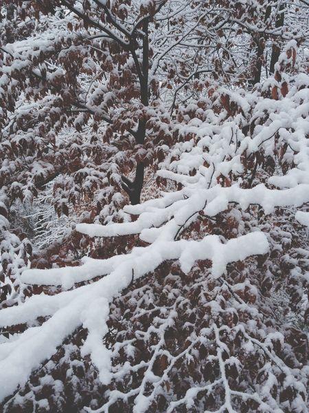 Snowway
