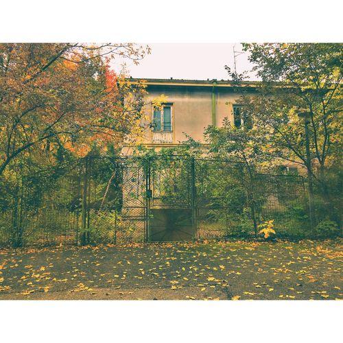 Tree Building Exterior Architecture Built Structure Autumn No People Change Sky Nature Orange Leaves Nature Romania Europe Travel