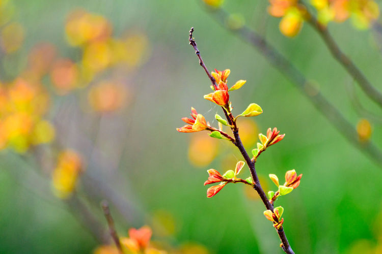 Adobe PS can easily artifact!😁 Artifact Autumn Leaves Of Spring Beauty In Nature Blooming Close-up Day Fragility Freshness Growth Leaf Leafs Leaves Nature No People Outdoors Plant Spring Time Springtime Break The Mold アーチファクトって例のノイズのこと?タグを辿って見ると👁、アンティークや遺跡、出土品の写真が並ぶ。📸追記:ISO問題とダストのこと。加工は問題無い。何しろ、写真加工ソフトを売る会社だからだ。つまり、アーチファクトはフォトショで解決すべき。もちろん自分のカメラの限界を知るのも重要だ。