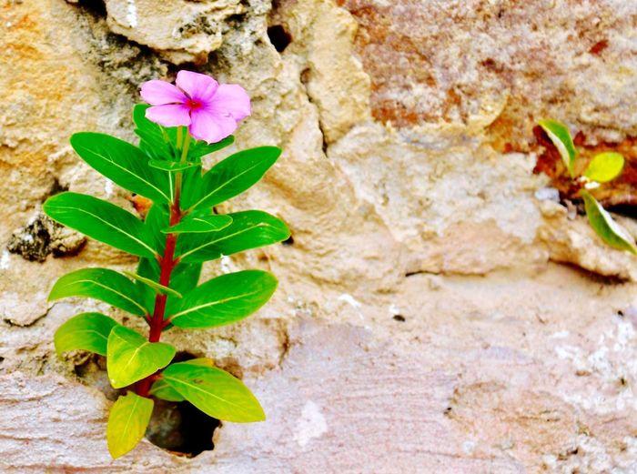 Leaf Plant Part Plant Flower Flowering Plant Growth Nature