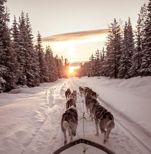 Dog On Snow Covered Landscape During Sunset