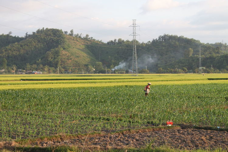 Woman spraying insecticide in fields