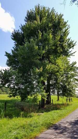 Tree Growth Green Color Nature Outdoors Day No People Sky Grass Beauty In Nature Freshness