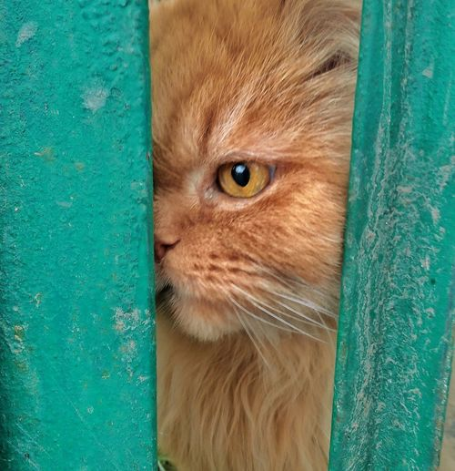 Cats One Animal Cat Eyes Cat Watching Me Cat Photography Cats 🐱 Looking At Camera Yellow Eyes Cat Lovers Cat Watching Animal Eye Portrait Close-up Animal Themes Day Domestic Animals Outdoors No People Mammal