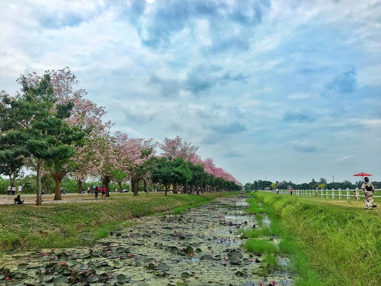 gimono girl in green filed Sky Nature Tree Real People Large Group Of People Cloud - Sky Beauty In Nature Day Growth Grass Field Green Color Men Outdoors Walking Scenics Women Tranquility Landscape Lifestyles Pinktrumpet ชมพูพันทิพย์