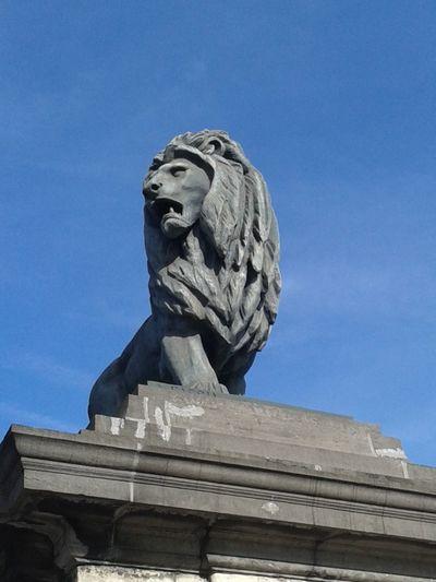 Laeken Serres De Laeken (Brussels). Lion King  Brussels
