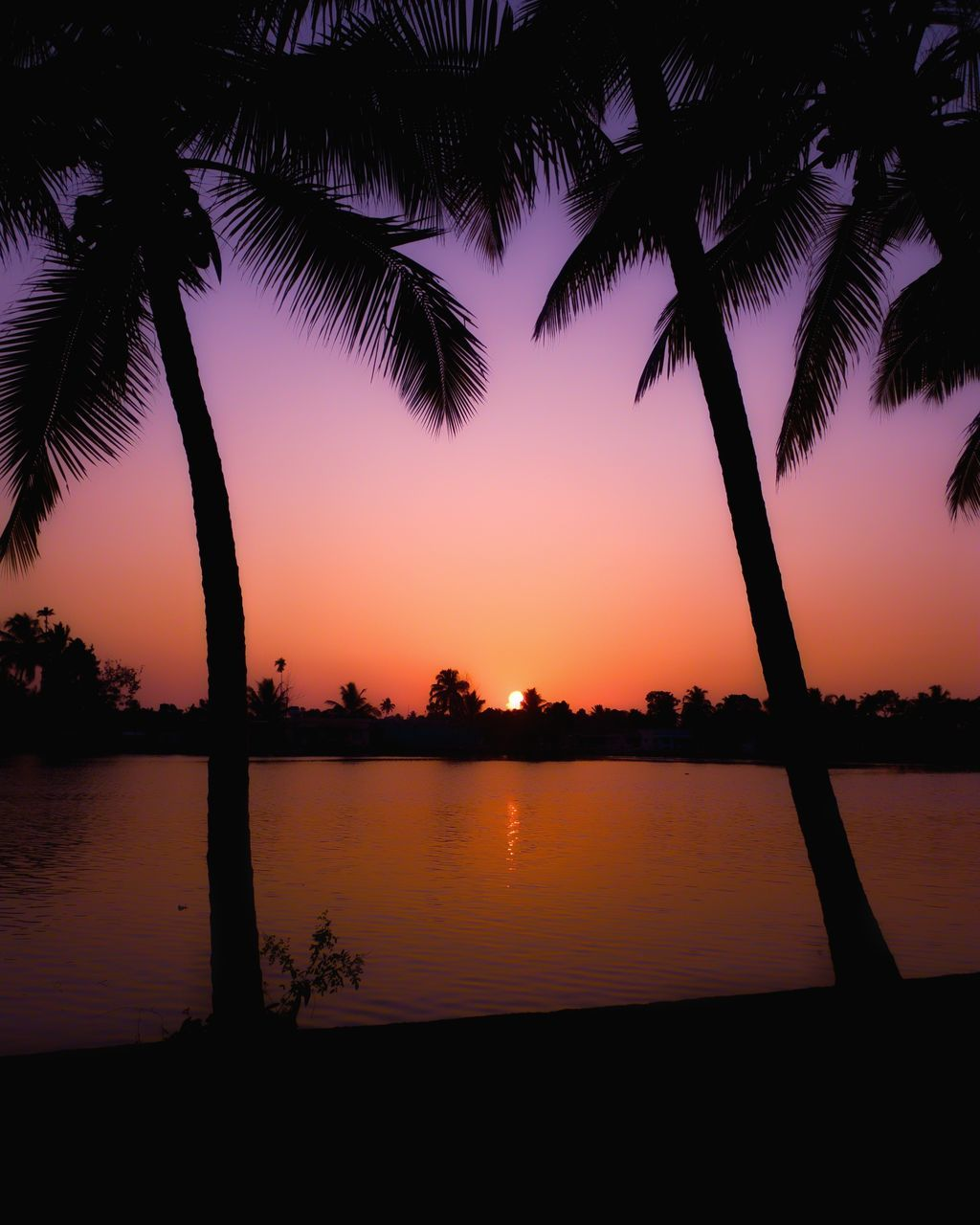 sunset, sky, tree, palm tree, tropical climate, silhouette, water, beauty in nature, tranquil scene, scenics - nature, tranquility, plant, nature, orange color, no people, reflection, growth, idyllic, lake, outdoors, coconut palm tree, swimming pool, palm leaf
