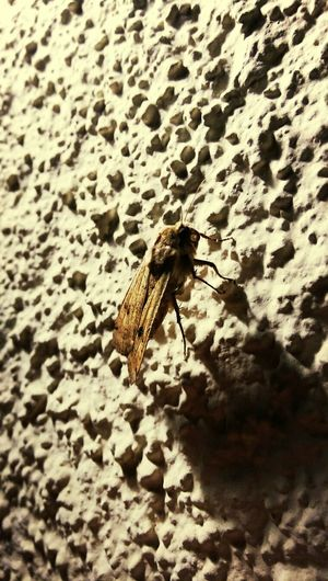 Animals Night Insects  Macro