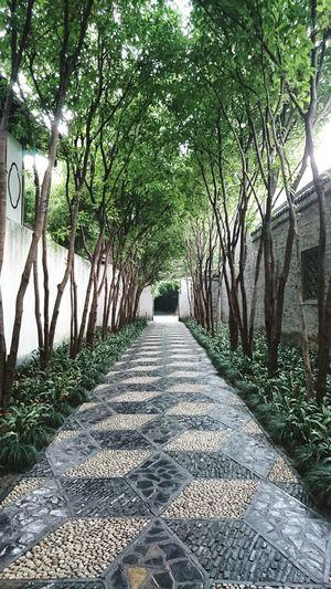 Tree Nature The Way Forward Growth Tranquility Chinese Garden Yangzhou China