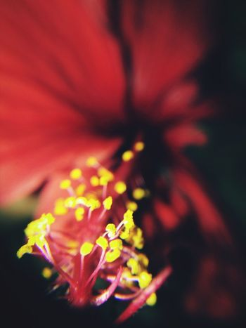 Hibiscus 🌺 Hibiscus Flower Pollen Check This Out New Learn And Shoot: Simplicity Trying Macro Smartphone Photography Flower Photography Mobilephotography Flowetstagram Newbie ✌