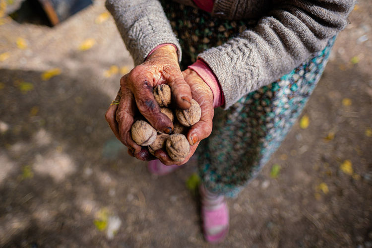 Hands of senior woman holding handful of walnuts.