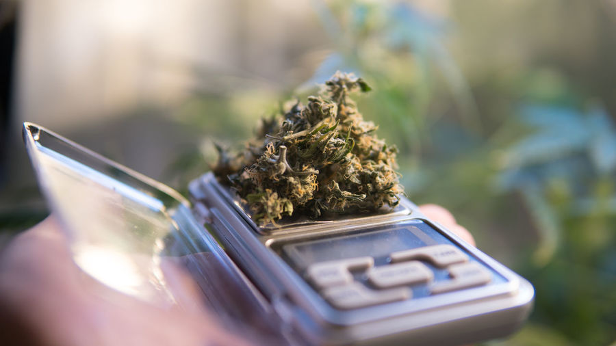 marijuana buds on scales close-up Scales Marijuana CBD Thc Marijuana Usa Medical Cannabis Marijuana - Herbal Cannabis Buds Cannabis Strains