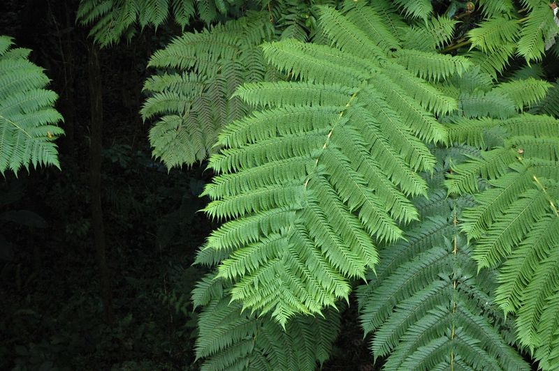 Close-Up Of Ferns Growing In Forest