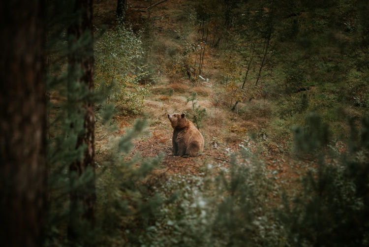 High Angle View Of Bear Seen Through Trees In Forest