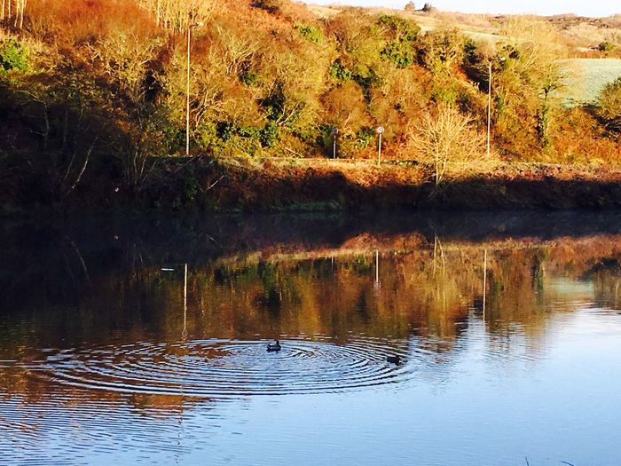 Irish autumn West Cork, Skibbereen, Ireland Morning Nature On Your Doorstep Eye4photography  Irish Autumn Beauty In Nature West Cork Ireland Bright Colors Walking Around River Riverside Duck Ducks Ducks In Water Ducks Swimming In The River Tranquility Beautiful Nature