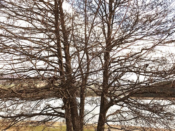 EyeEm Best Shots Tree Bare Tree Branch Low Angle View Nature Outdoors Beauty In Nature No People Day Tranquility Sky Tree Trunk Growth Scenics Lake View Lake Nature Photography Italy Spring EyeEm Landscape Italia Lago Arvo Sila