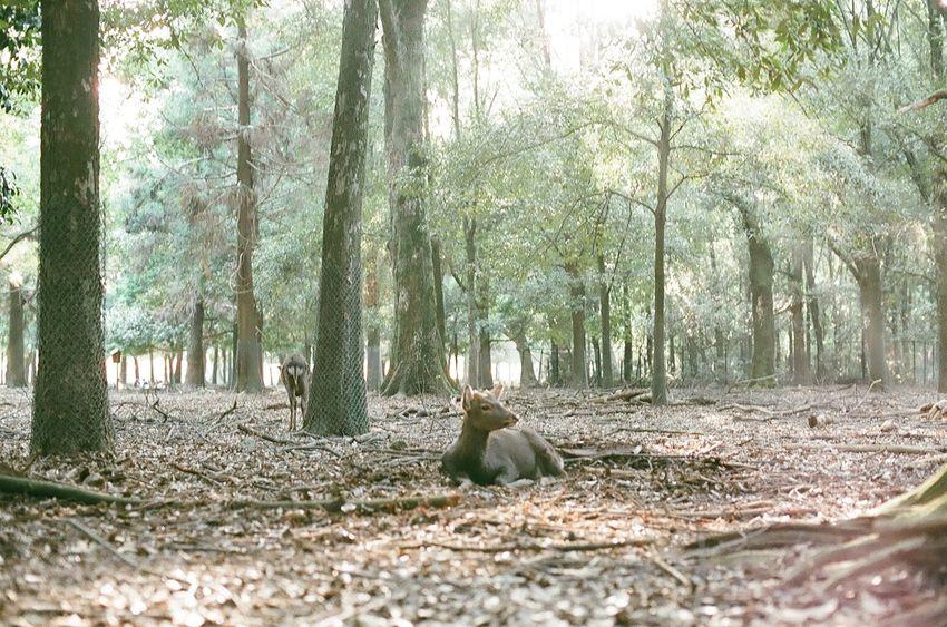 Film Photography Filmcamera 35mm Film Nikon NikonFM2 Japan Nara Deer