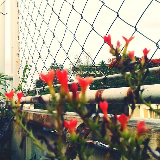 Viewfromtherooftop Wire Flowers
