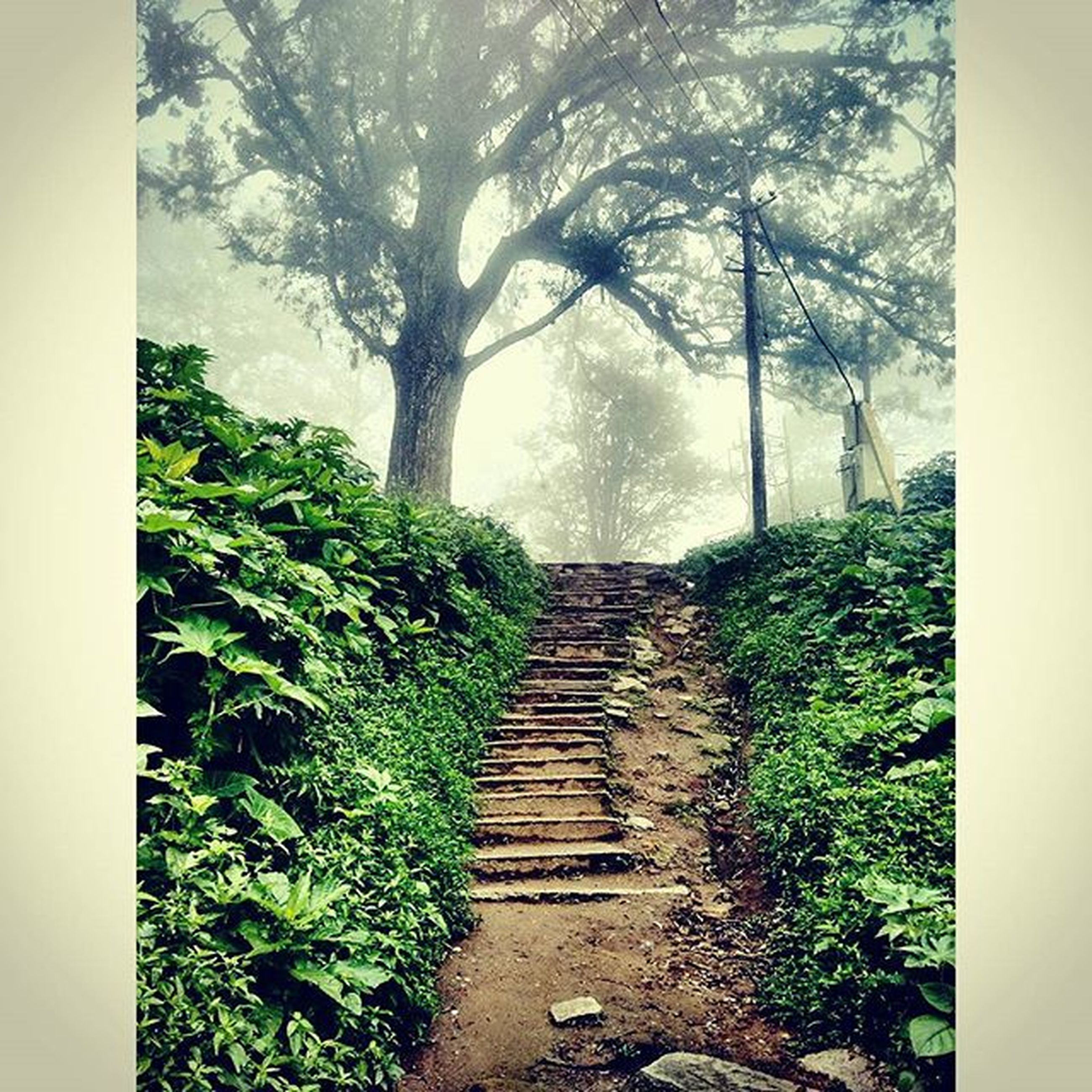 the way forward, tree, plant, narrow, steps, growth, tranquility, diminishing perspective, railing, nature, vanishing point, walkway, footpath, pathway, tranquil scene, forest, green color, steps and staircases, day, leading
