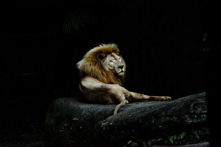 #Night Safari Singapore First Eyeem Photo