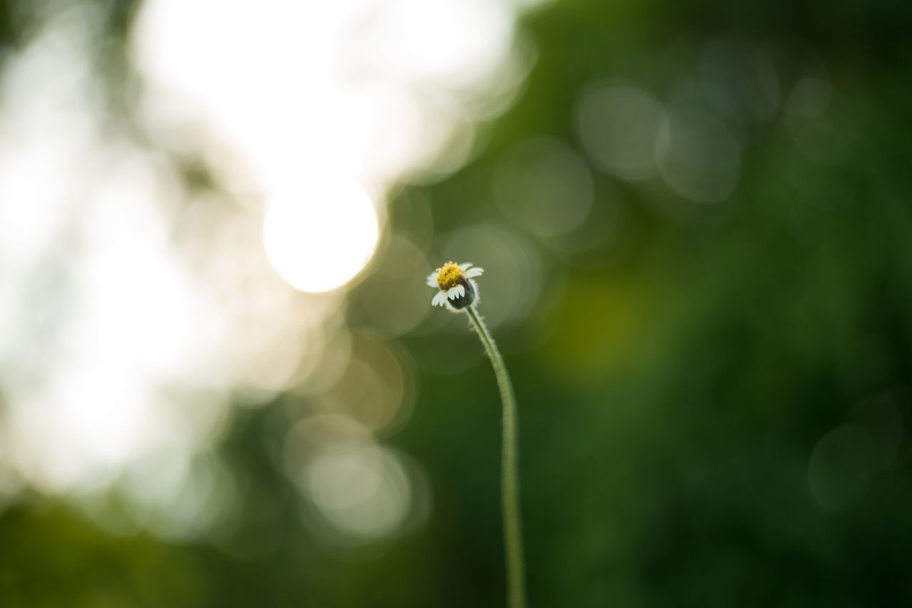 plant, beauty in nature, close-up, flower, growth, fragility, invertebrate, no people, one animal, vulnerability, animal themes, focus on foreground, animal, animal wildlife, insect, day, flowering plant, freshness, nature, animals in the wild, outdoors, flower head, lens flare