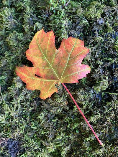 Autumn Lea