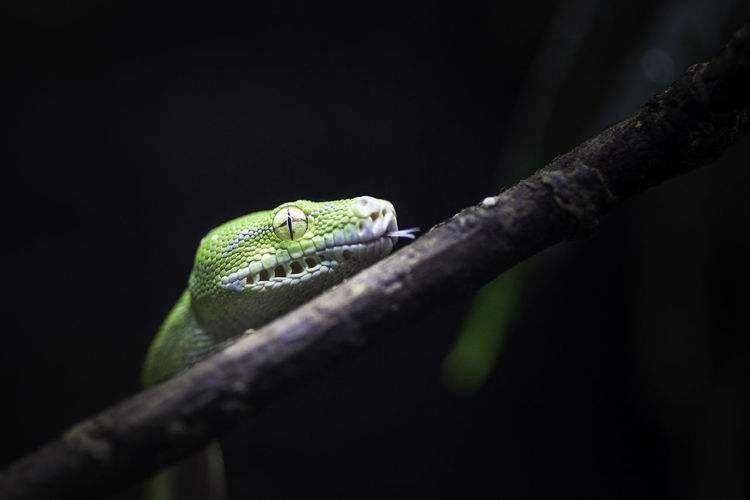 Close-Up Of Reptile On Branch Against Plants