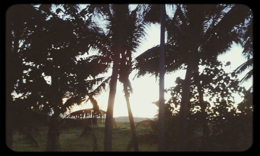 Life under the palm trees...♥ Relaxing Enjoying Life Sunset Palm Trees